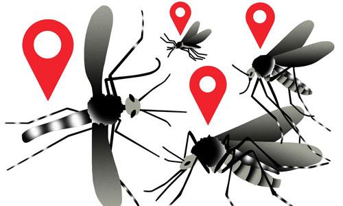 Mosquitos for Zika